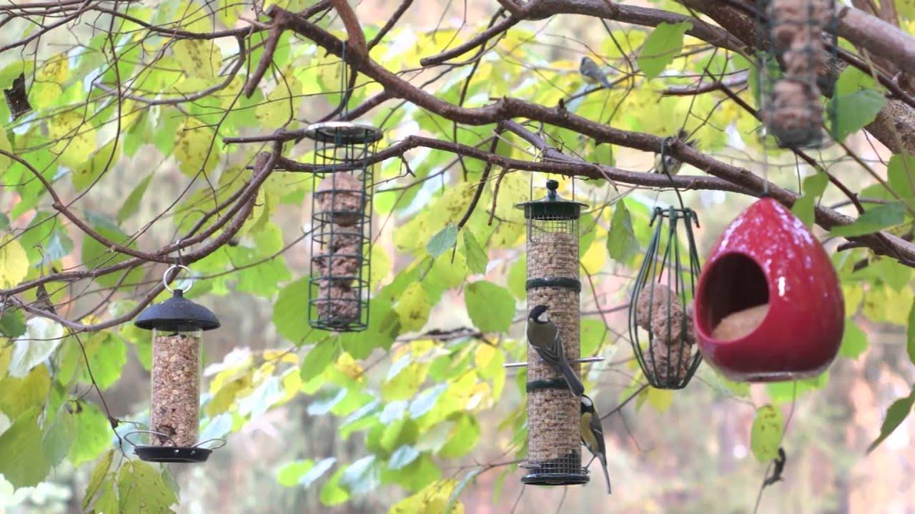 vögel an der futterstation im oktober 2015 - youtube