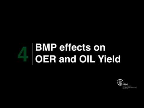 High oil extraction rate (OER) does not necessarily mean high oil yield