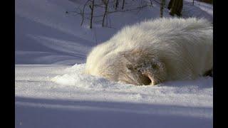 Маремма и снег :)