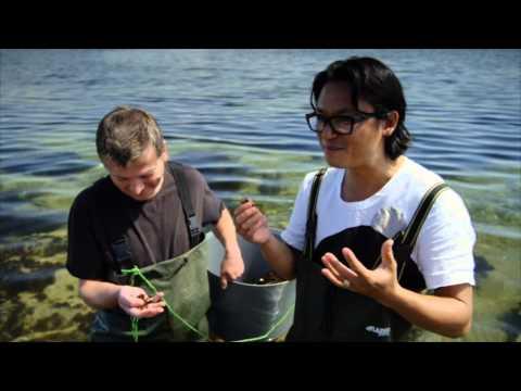 Luke Nguyen harvesting seaweed