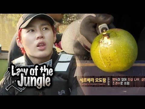 OngSeungWu Picks A Fruit! But.. Due To Its Toxic Nature, It's Inedible.. [Law Of The Jungle Ep 325]