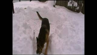 Where to potty your dog in the snow by Bobs Pet Stop