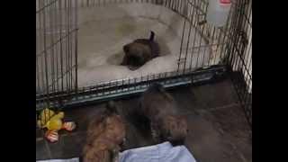 Shih Tzu Puppies For Sale Nc Http://www.shihtzubreedernc.com