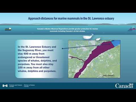 Approach distances for marine mammals in the St. Lawrence estuary