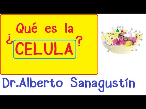 Célula humana: introducción | Citología-Biología celular from YouTube · Duration:  8 minutes 59 seconds