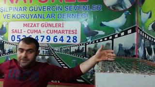 Gambar cover Evladınızla Gidebileceğiniz Güvercin Derneği - G.O.Paşa - Yeşil Pınar Güvercin Derneği. 5364796428