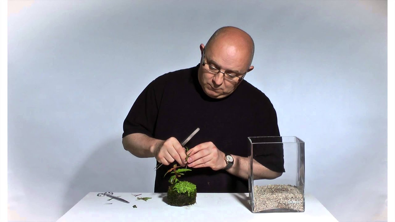 Aquascaping Baum Anleitung : Wabi-Kusa Tutorial: Cube by James Findley - YouTube