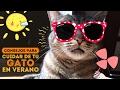 11 Consejos para cuidar de tu gato en verano