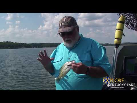 Using The Golden Rule For Fish Measuring