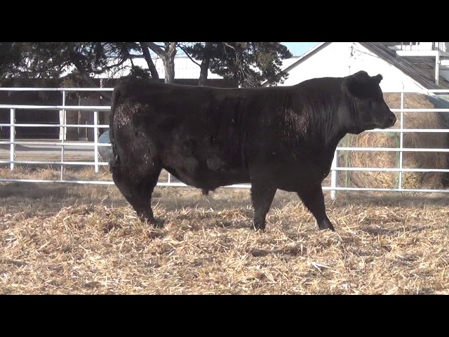 Express Ranches Lot 176