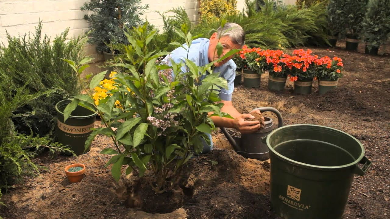 Tips on Transplanting a Lilac Bush : Garden Savvy - YouTube