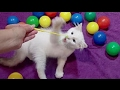 CATS vs BALLOONS - Funny Cats Popping Balloons Compilation 2017