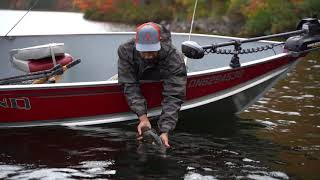 BITS & BOBS: Fall Fishing in Algoma