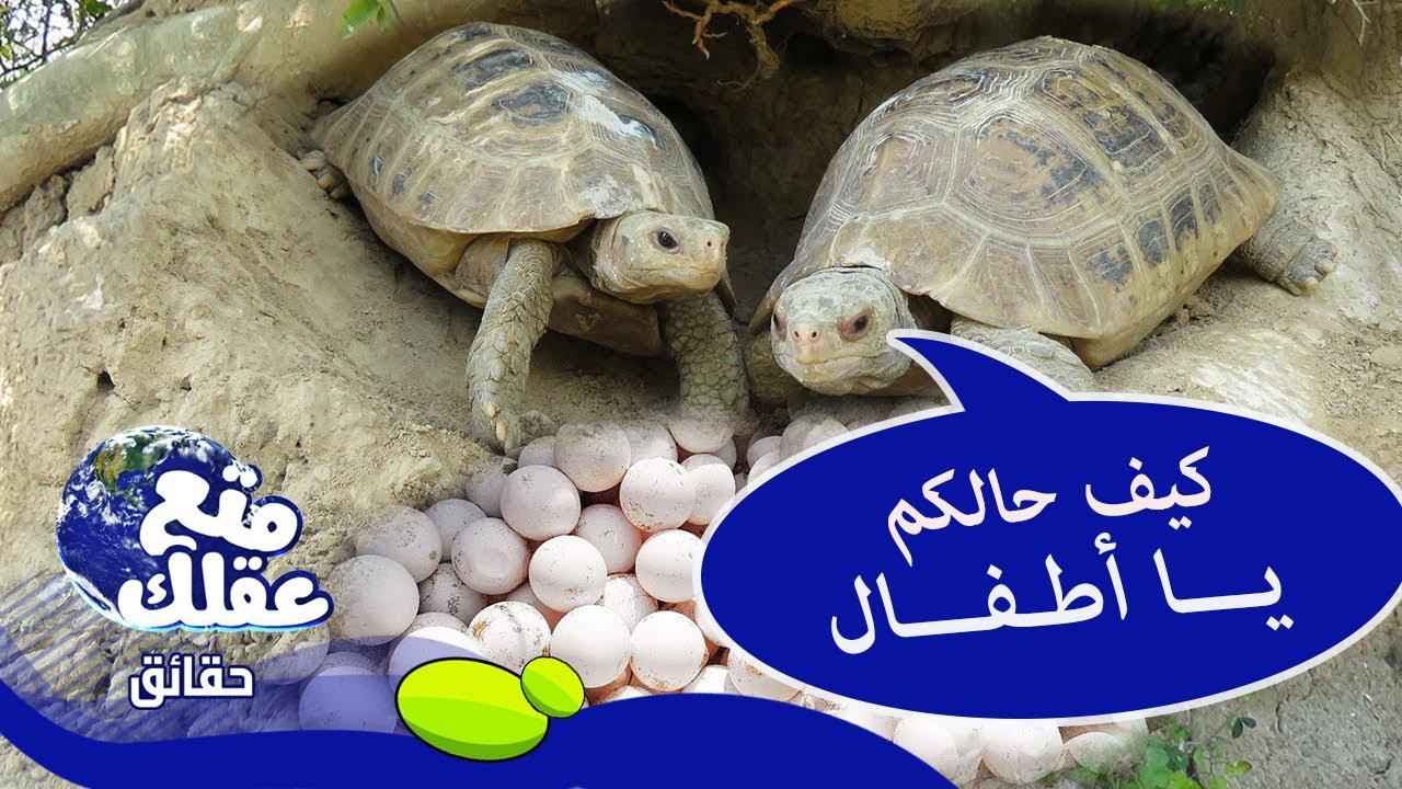 السلاحف تتحدث إلى بيضها ! - 7 حقائق غريبة ستدُهشك