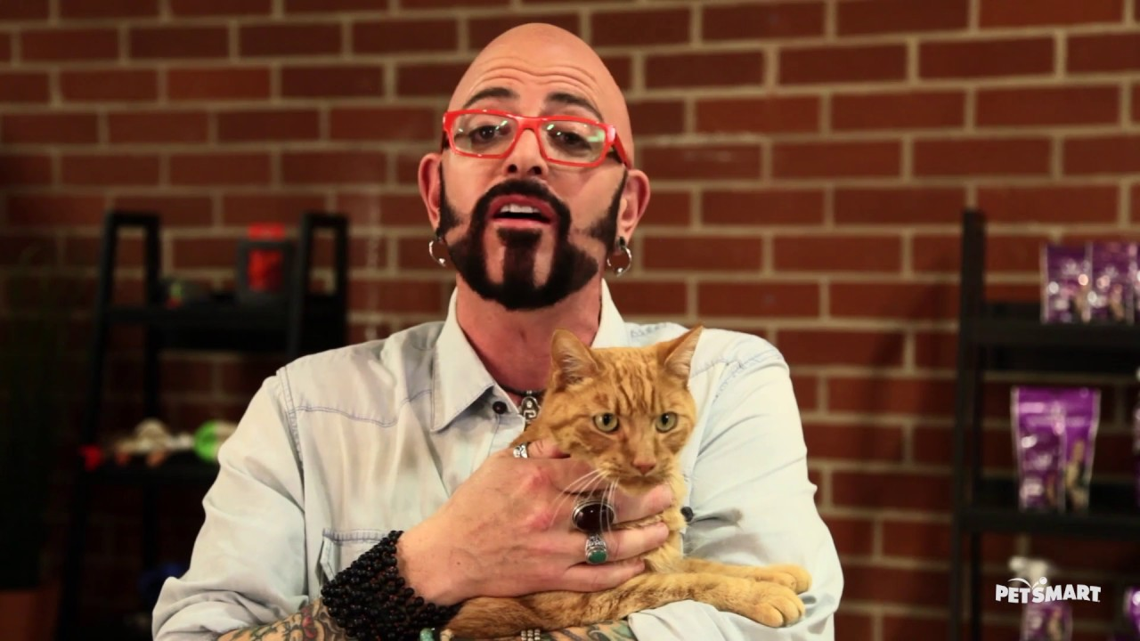 Jackson galaxy is all about cats youtube for Jackson galaxy petsmart