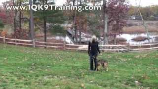 "Iq K9 Training | Dog Training ""come"" And Return Into ""heel"" Position - Carlsbad Dog Trainer"