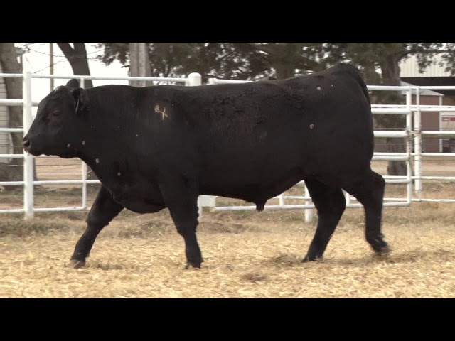Express Ranches Lot 449