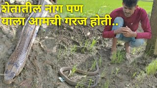 कधी कधी साप अशा अवस्थेत सापडतात Snakes sometimes need our help
