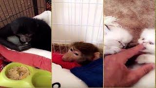 مقاطع اسامه الدغيري عاشق الحيوانات المفترسة