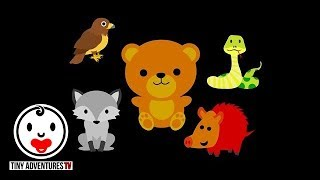 Learn the Animal Sounds | Wolf, Bear, Snake, Hog, Hawk | Simple Learning for Babies, Toddlers