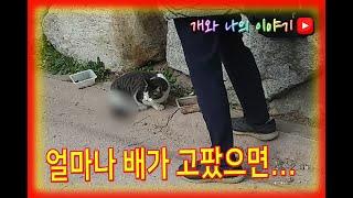 길에서 새끼 낳다말고 밥먹는 길 고양이