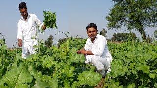 Fresh Sarson Ka Saag Makhan Lasi aur garam Roti Full Punjabi Village Style | MY Village Food Secrets