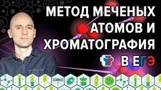 44. Метод меченых атомов и хроматография в ЕГЭ по биологии