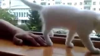 Кошка боится, что рука упадет из окна