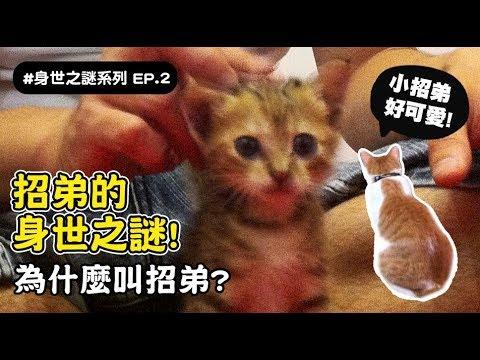 【招弟的身世之謎!為什麼叫招弟?】志銘與狸貓