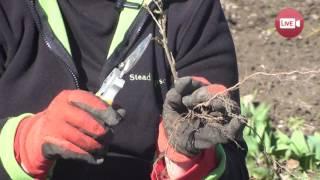 Персональный блог садовода и огородника Светланы Кацаповой 31 выпуск (пересадка кустарниковых)