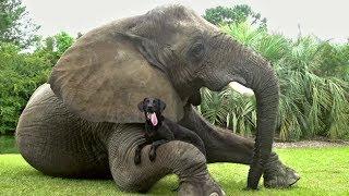 Самые добрые и позитивные животные в мире