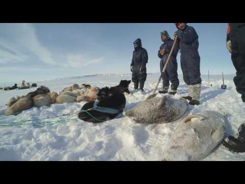Greenland - Ittoqqortoormiit