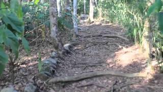 Walking in the Greeny. Venezuela