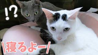 寝る時間なのに行動開始する猫たち