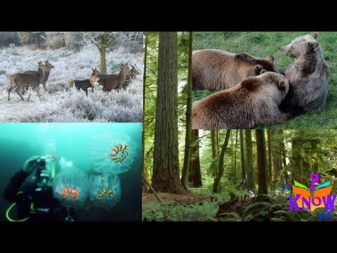 Different Animal Habitats (where animals live) - HD footage for Kids