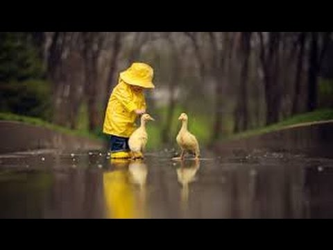 Pet ducks in a pool//Animals for kids videos||DUCKS||cute duckling ...