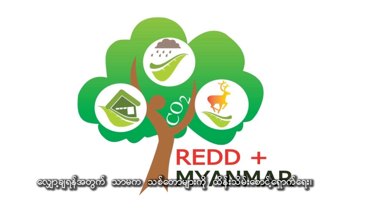 Video | Myanmar REDD