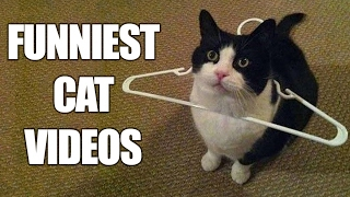 Funny CATS - HOLD YOUR LAUGH IF YOU CAN (CHALLENGE) Videos Ever