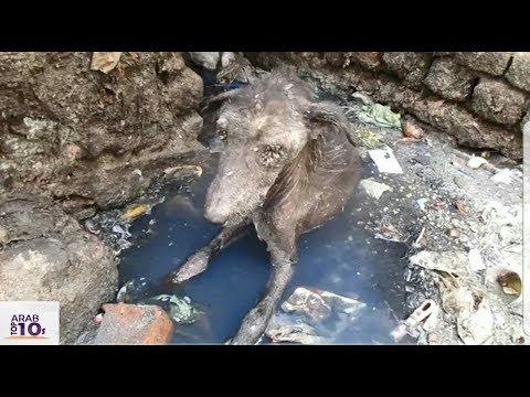 عثر رجل على هذا الحيوان وظن أن حيوان عادي ولكن عندما اقترب منه كانت الصدمه