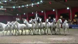 Lorenzo at European Arabian Horse Championships  October 2014