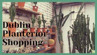 식물쇼핑 | 플랜테리어…