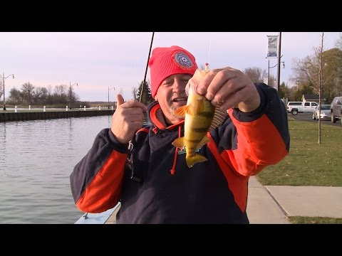 Shore Fishing  Perch And Whitefish