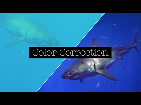 Color Correction For Underwater Video With The Channel Mixer Effect In Adobe Premiere Pro