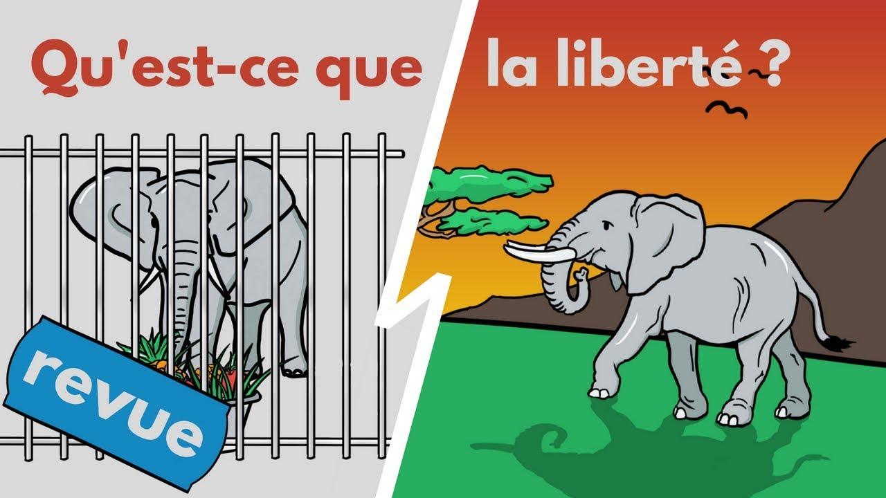 Comment Être Libre Dans Un Monde Non-libre? | LA VIDÉO DE LA LIBERTÉ (revue)