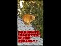 野良猫が我が家の2階の屋根で発情し、求愛!鳴き声で飼い猫達が落ち着きないので覗いてみたら・・・【ペッ�