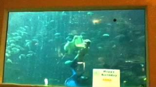 人魚になってエイをつかんで泳ぐ姿は人魚そのものですね.