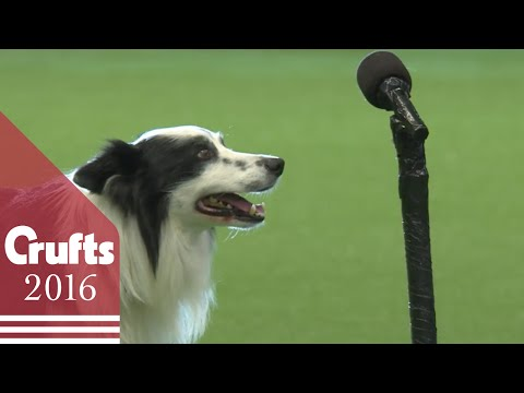 Freestyle Heelwork To Music Competition - Part 1 | Crufts 2016