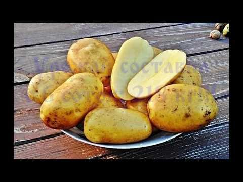 """Выращивание картофеля (Кроне """"Крона"""")2018/Вирощування картоплі"""