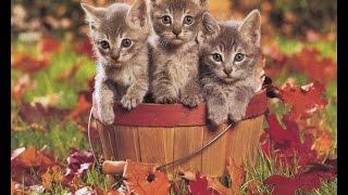 Самые смешные кошки. Смешное про кошек и котов. Лучшие видео 2014.