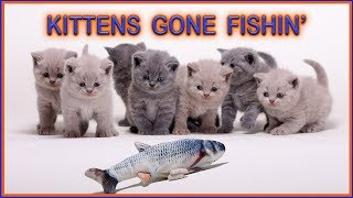 Cats vs Fish | Kittens Fishing and Loving It | 🌸🌸🌸 [British Shorthair Lilac & Blue siblings]
